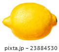 レモンイラスト2 23884530