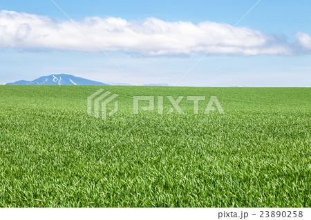 草原 23890258