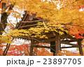 秋の京都 23897705