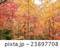 秋の京都 23897708