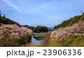 桜の花 23906336