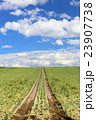 たまねぎ畑 23907738