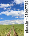 たまねぎ畑 23907739