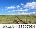 たまねぎ畑 23907934