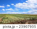 たまねぎ畑 23907935