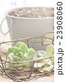 多肉植物 23908060