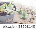 多肉植物の寄植え 23908145