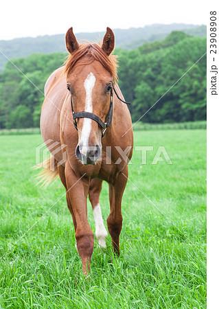 馬 23908908