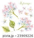Watercolor hydrangea set 23909226