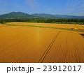 収穫直前の広大な北海道の小麦畑 23912017