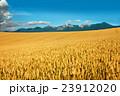 北海道産小麦「きたほなみ」 実りの丘 十勝岳を望む 23912020