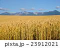 北海道産小麦「きたほなみ」 実りの丘 十勝岳を望む 23912021