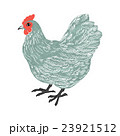 鶏 鳥 水彩のイラスト 23921512