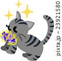 可愛い猫と綺麗な首飾り 23921580
