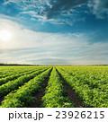 農業 農場 野原の写真 23926215