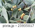 Cactus background 23935017