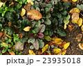 Automn garden background 23935018
