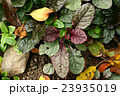 Automn garden background 23935019
