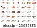 海産物いろいろ3枠名称 23939853