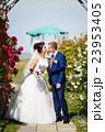 嫁 新婦 花嫁の写真 23953405