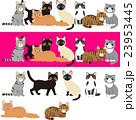 様々な種類の猫のイラストセット 23953445