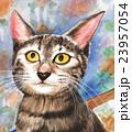 動物 猫 アメリカンショートヘアーのイラスト 23957054