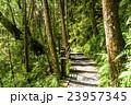 林 森 樹林の写真 23957345