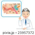 耳の構造 医師 説明 23957372