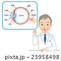 目の仕組み 医師 説明 23958498