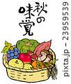 秋の味覚 23959539