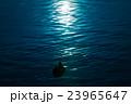 湖 カモ 水面の写真 23965647