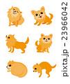 室内犬、ペット、チワワ、犬 23966042