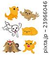 室内犬、ペット、犬、愛犬、いろいろな犬種 23966046