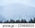 降りしきる雪と針葉樹の山肌 23968920