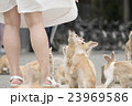 うさぎ 動物 うさぎ島の写真 23969586