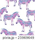 multi colors zebra 23969649