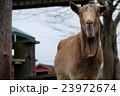 まかいの牧場のヤギ 23972674