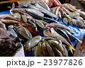 市場の魚 23977826