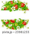 いちご イチゴ 苺のイラスト 23981233