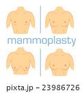 胸 胸元 乳房のイラスト 23986726