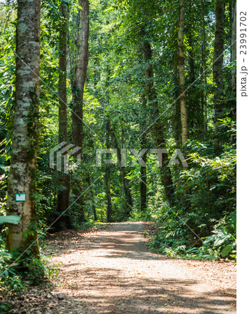 Walking trail in forest at Koh Kood 23991702