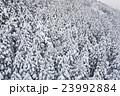 針葉樹林積雪 23992884