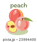 Vector peach isolated  fruit vector illustration 23994400