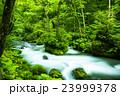 奥入瀬渓流 渓流 奥入瀬の写真 23999378