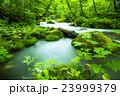奥入瀬渓流 23999379