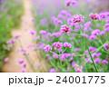 クローズアップ お花 フラワーの写真 24001775