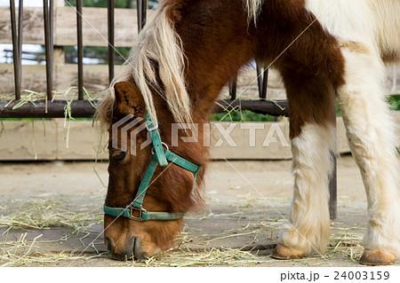 白いたてがみの馬 24003159