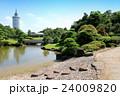 夏の見浜園、幕張海浜公園(8月)千葉県千葉市美浜区 24009820