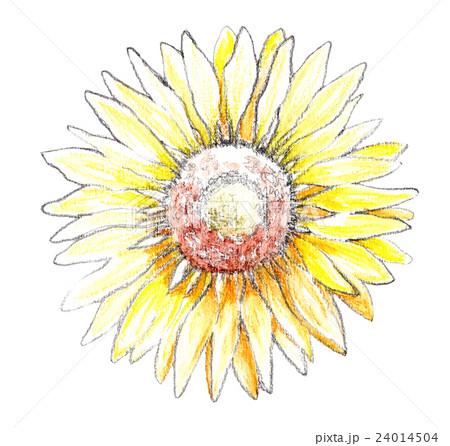 ひまわり 向日葵 イラスト