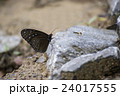 Beautiful Butterfly on rock in nature 24017555